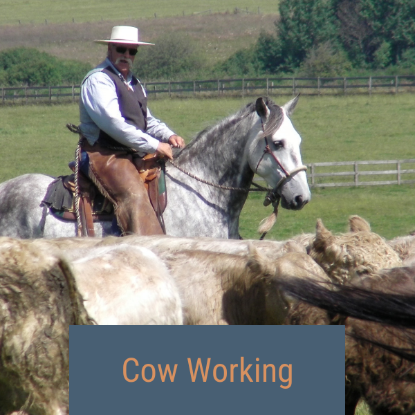 Cow Working