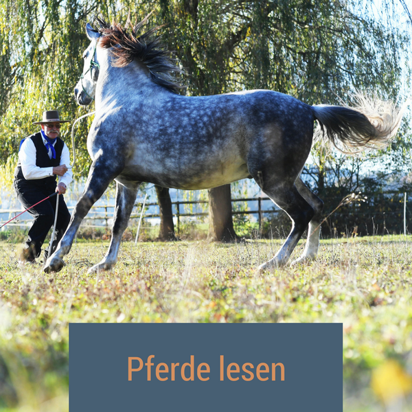 Pferde lesen